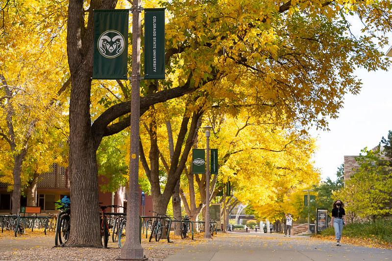 CSU fall leaves